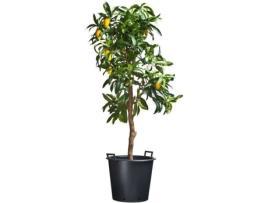 NATURE - Vaso NATURE Preto (50 x H40 cm; 50 L)
